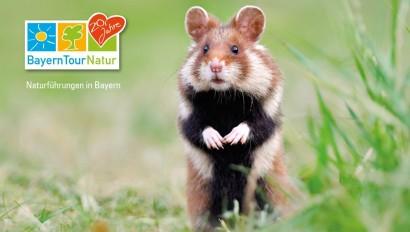Die BayernTourNatur startet in den Sommer